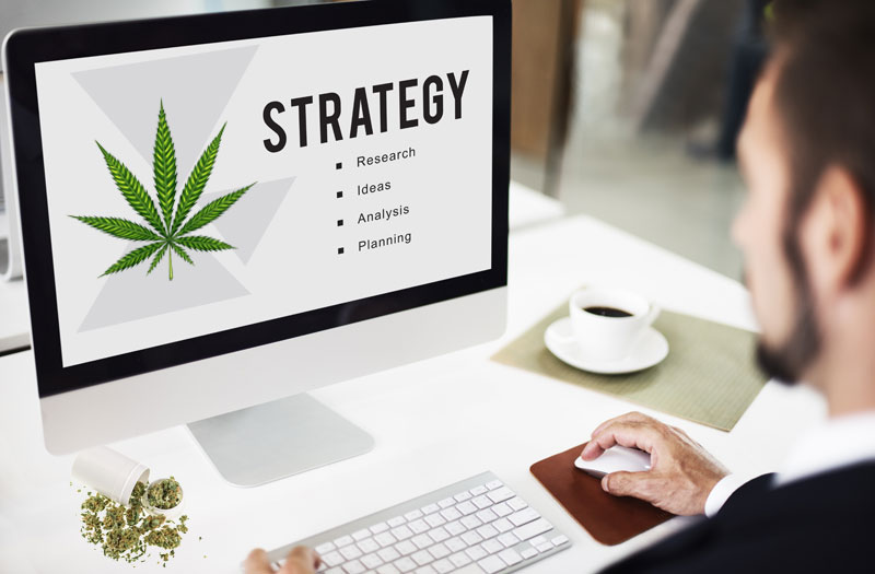 marijuana marketing jobs