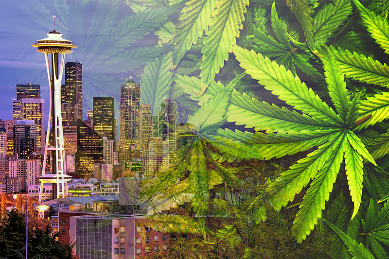 Image result for seattle marijuana