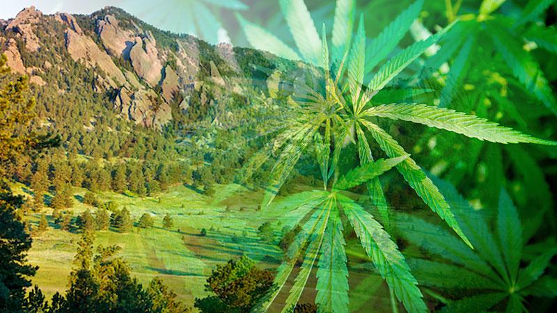 Boulder Marijuana Jobs