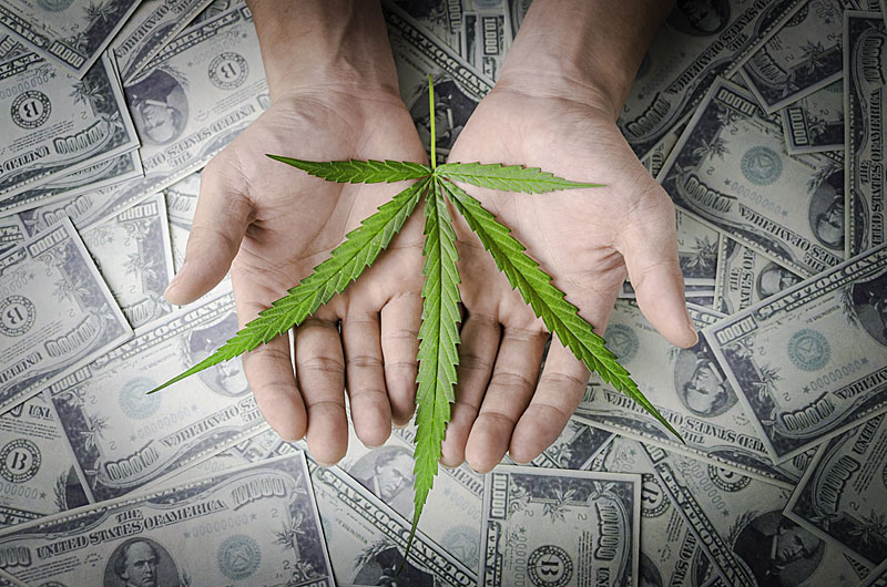 How to Earn Top Dollar in the Marijuana Industry