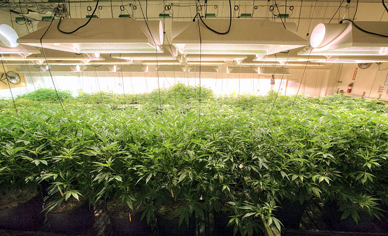 Portland Marijuana Cultivation Jobs