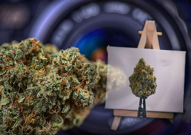 Marijuana Photography Jobs