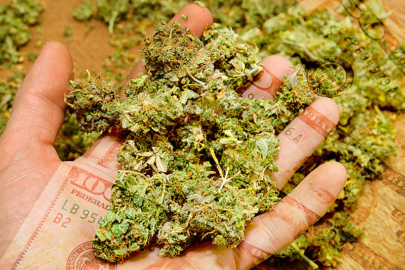 Marijuana Bud Trimmer Salaries