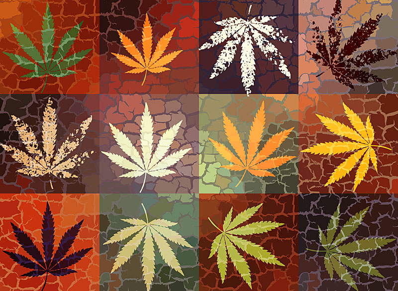 Marijuana Graphic Design Jobs