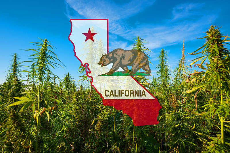 California Marijuana Jobs