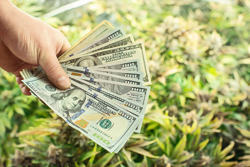 Marijuana Grower Salaries