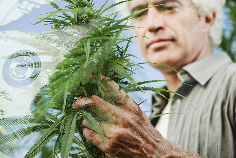 how much do master growers make