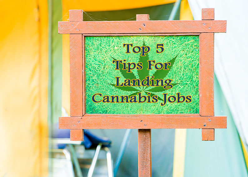 Top 5 Tips For Landing Cannabis Jobs Marijuana Gig Tips Tricks
