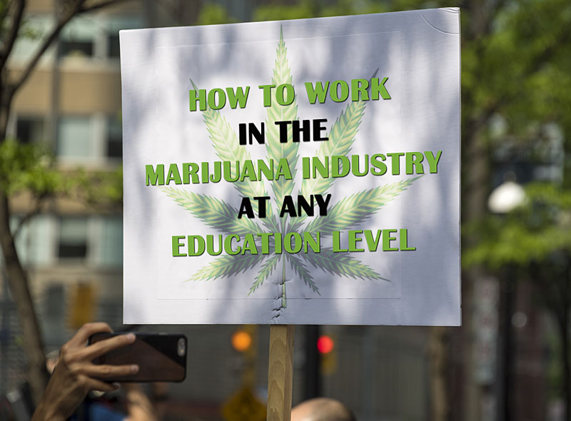 How to Work in the Cannabusiness at Any Education Level
